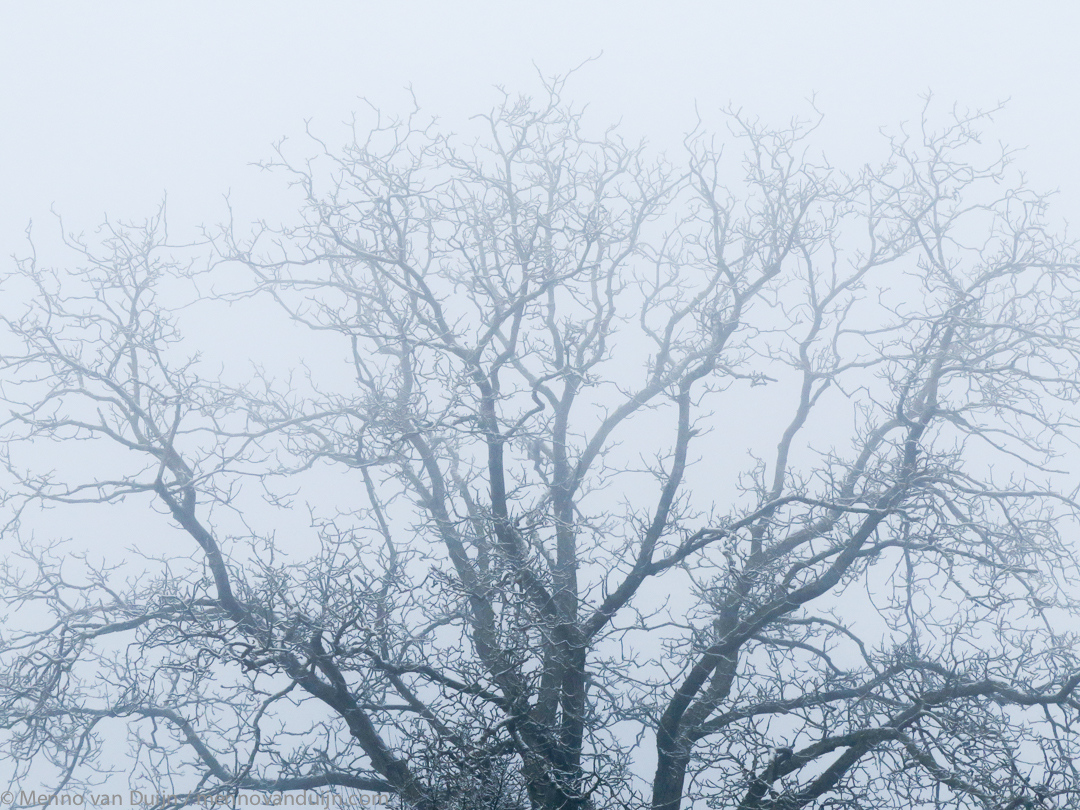 Moody Oak Tree