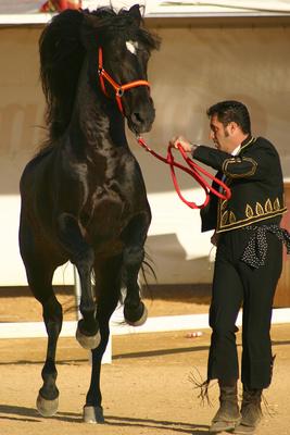 Sicab horse show