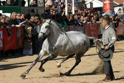 Golega horse fair