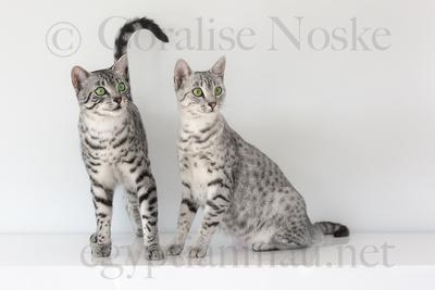 Asaar von Skarrabaus and Milou of Silvershine