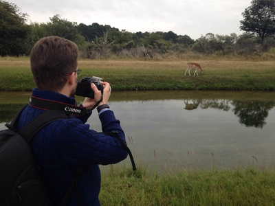 photographing fallow deer with reflection