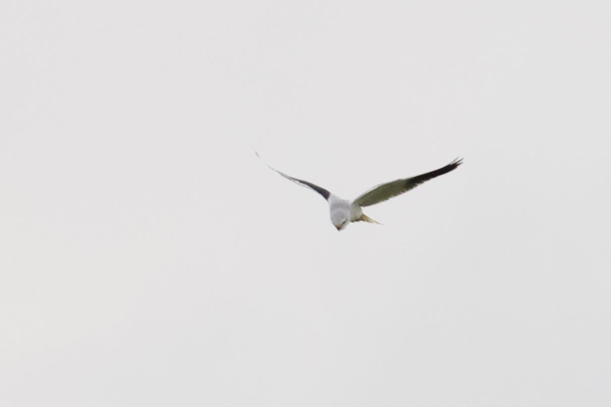 20181110 Noord Holland birding tour II