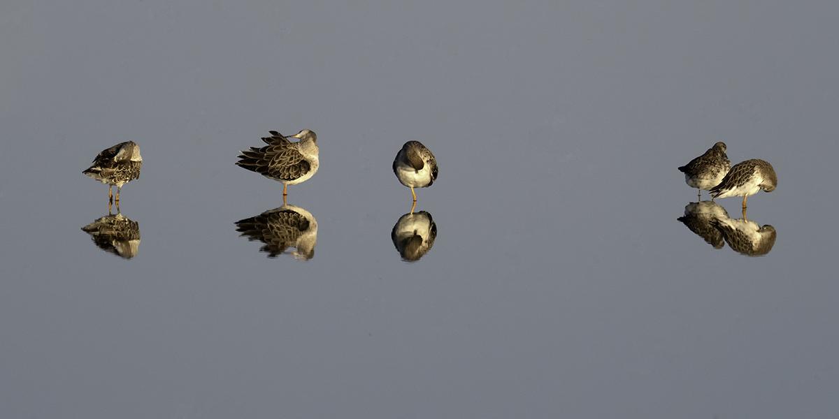 20180809 - Oostvaardersplassen Bird Photography