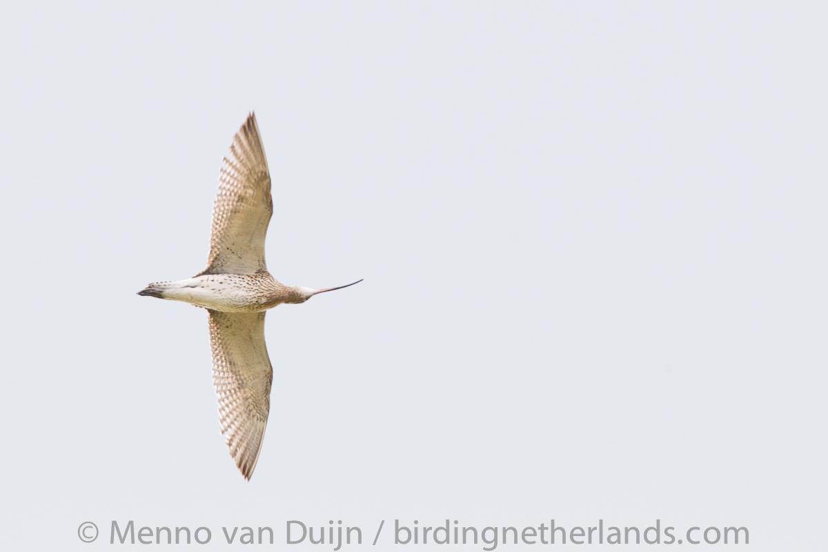 20190505 birding Nieuwkoop- and Oostvaardersplassen