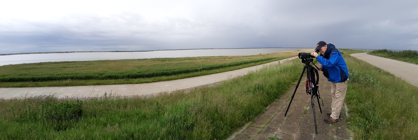 20190528 full day guided birding at the Oostvaardersplassen