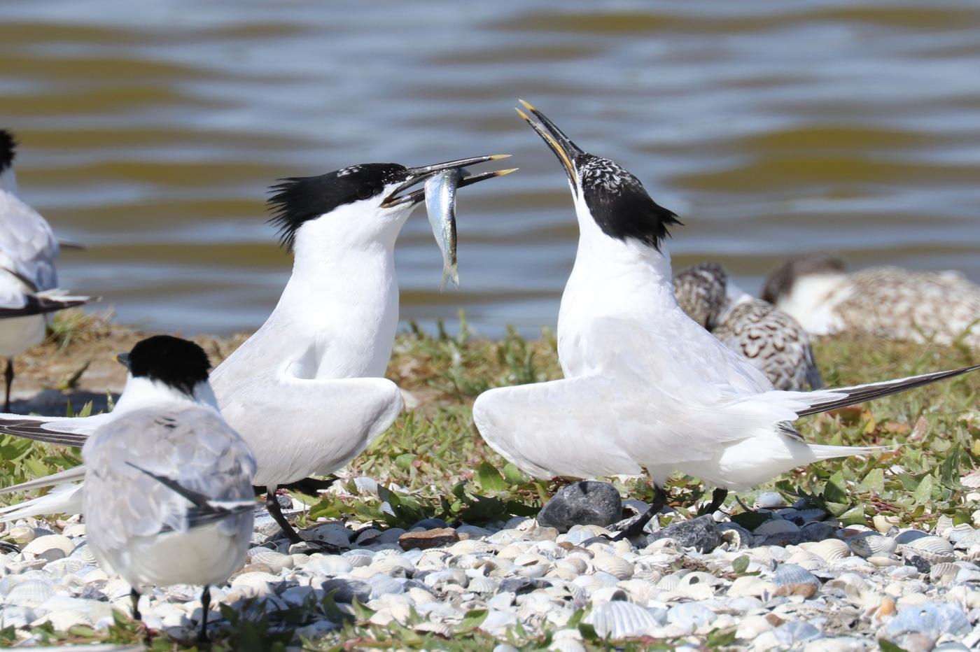 20190703 bird photo tour Noord Holland