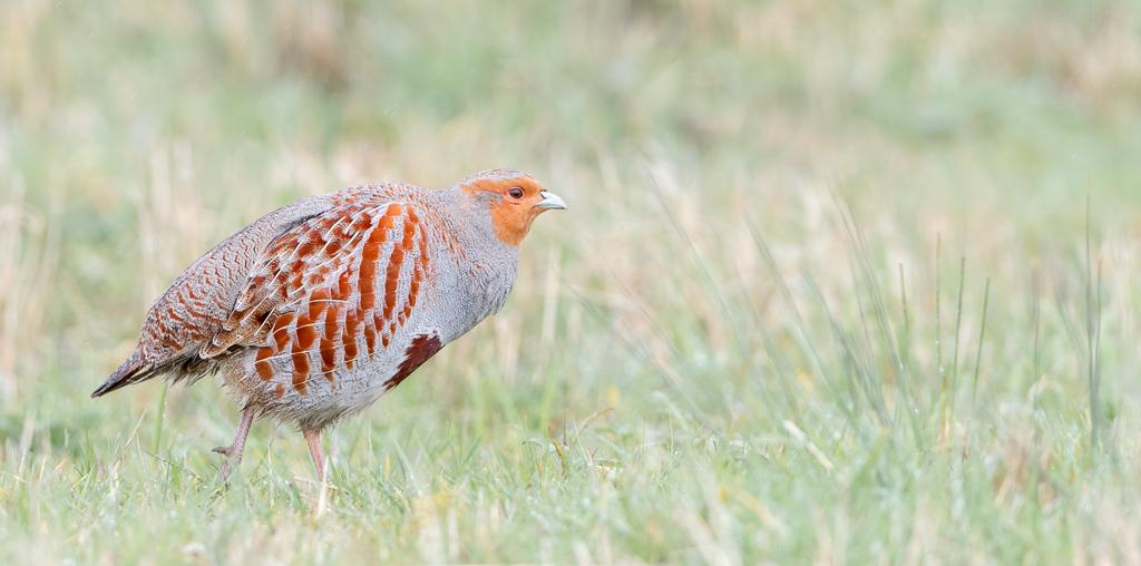 20200313 Full Day Target Birding